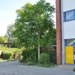 Schule 007